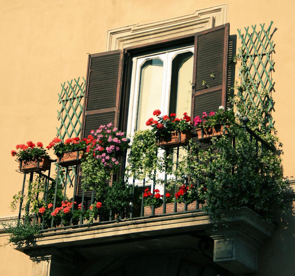 Piante Rustiche Da Balcone balconi verdi: aria nuova in cittÀ - 5w magazine