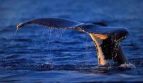 santuario dei cetacei andora